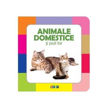 Animale domestice si puii lor (Prut)