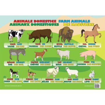 Plansa Animale Domestice (Ars Libri)