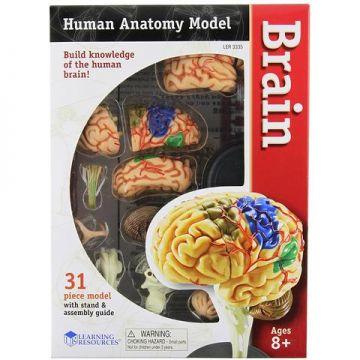 Learning Resources Creierul uman - macheta
