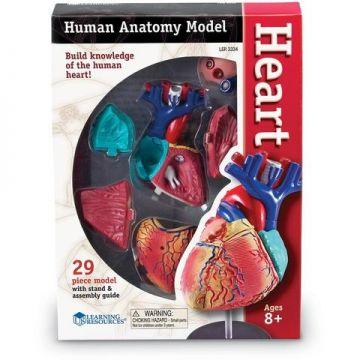 Learning Resources Sablon corp uman - Inima